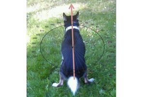 0102-dogs-magnetic-field_full_600