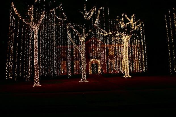 River Oak christmas lights