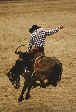 Bucking bronco rider in action at rodeo, side view