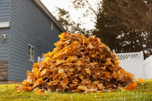 A huge pile of raked fallen autumn leaves in a yard.